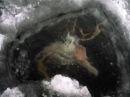 Топ 10 Шокирующих Вещей Найденных Подо Льдом