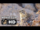 BORN IN CHINA Movie Clip - Meet Dawa (2017) Disney Nature HD