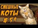 Приколы с Котами 2017 ДО СЛЁЗ Смешные коты Funny Cats
