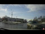 Олени на дорогах Костромы-5. Торопыга (15.03.17)