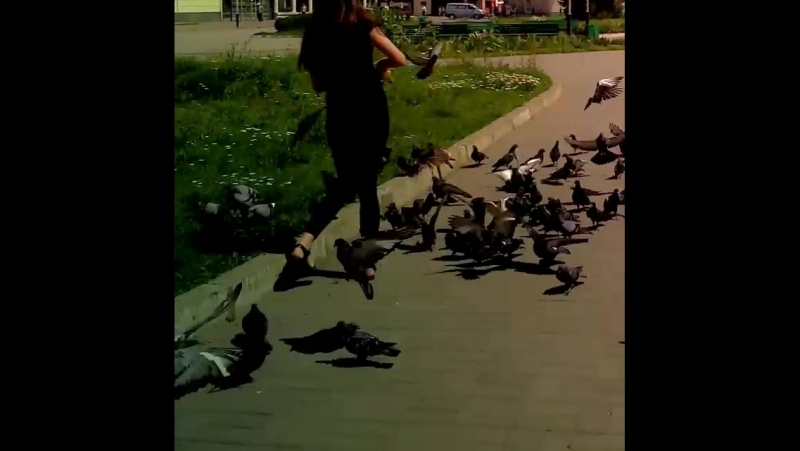 королева голубів