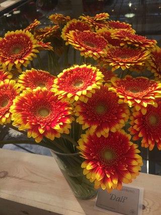 Цветы пальмовая кукуруза купить минск где купить розы по 50 рублей
