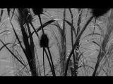 ДОРОГАЯ (1965) - Джон Шлезингер