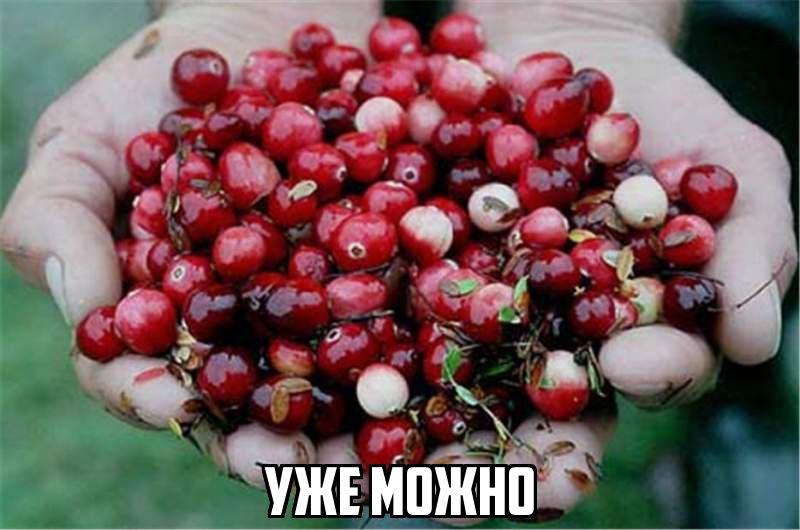 С 5 сентября в Томской области официально разрешено собирать клюкву
