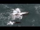 BBC Планета Земля Planet Earth 2006 09 Мелководные моря