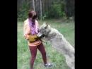 Красная Шапочка мутузит волка 28.5.17