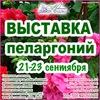 Выставка пеларгоний в Невском Доме Фиалки