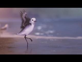 Chú Chim Trên Bờ Biển  Piper So cute