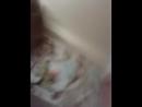 а это наш Эдичка!)2013-01-11-18-15-28