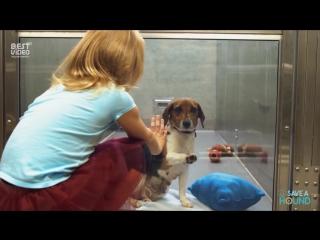 Каждому животному нужен свой дом