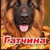 Дрессировка собак   Гатчина