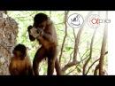 Зоя Зорина Высшие когнитивные способности животных