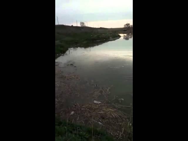 Рыбалка в шымкенте на змееголов 6кг живой вес