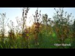 Природа. Травы. Пение птиц. Музыка. Релакс. Медитация. Звуки природы. Космос.