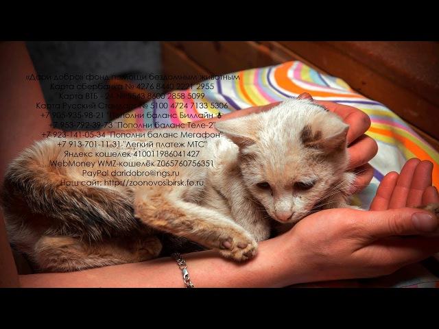 Ошейник врос кошке в кожу и мышцы безответственность хозяев Help the cat with an injury
