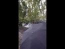 Питомник Ахмечет выкопка крупномеров Яблони