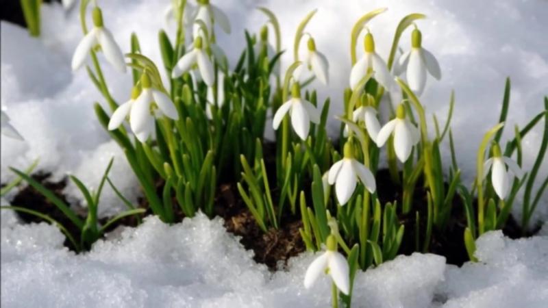 ПРОБУЖДЕНИЕ.или всё начинается с Весны