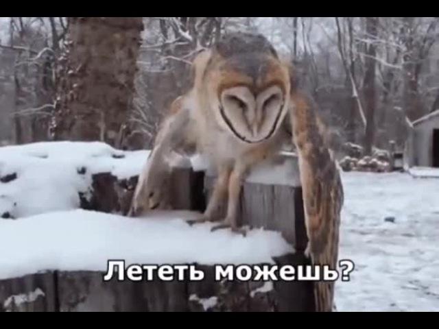 Drunk calambur owl