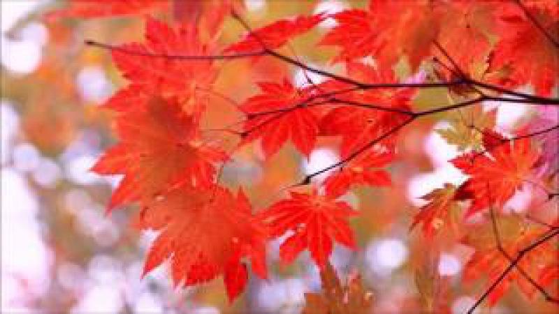Осень. Времена года. Антонио Вивальди.