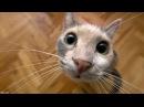Приколы про кошек самые смешные прикольные ролики