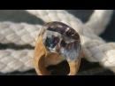 Ringe aus Kunstharz und Holz - Secret Wood Rings - wood and resin rings. Кольцо из дерева и эпоксидной смолы.видео урок мастер класс