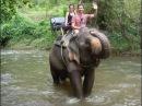Катание на слонах Таиланд