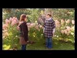 Как сделать красивый сад осенью