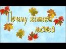 🍁 Почему осенью листья желтеют 🍂