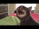 Бедная кошка чихает много раз