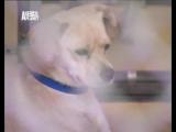 dog_whisperer_11_s5 a_member_of_the_family