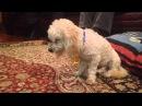 Собаки, которые проиграли бой сну