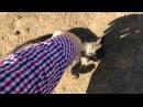 Дикая игра маленького тигрёнка