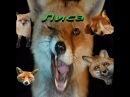 Лучшие приколы с лисами.Подборка смешных и интересных видео с лисами и лисицами.