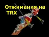 Отжимания на TRX jn;bvfybz yf trx