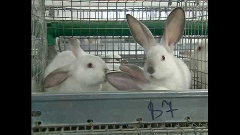 Сделано на Смоленщине: Кролъ и К