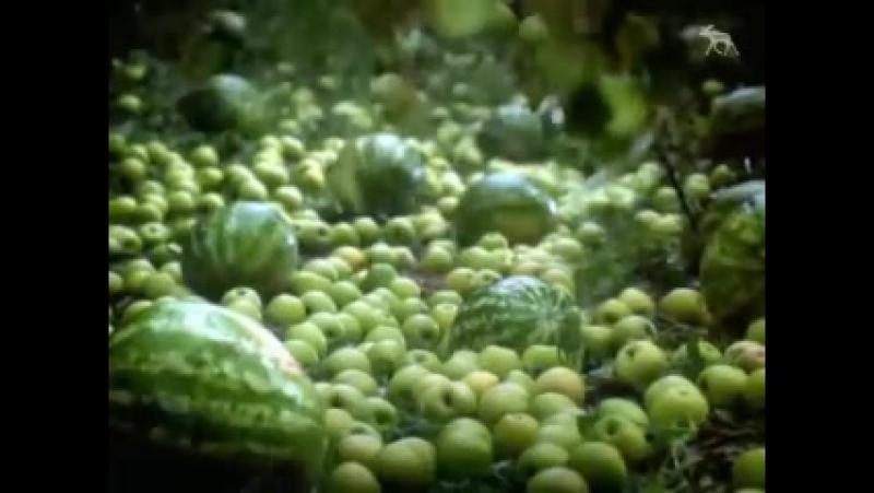 Заставка конца эфира (НТВ, 2002-2003) Яблоки