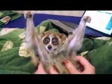 Лори — самые милые животные в мире!.mp4