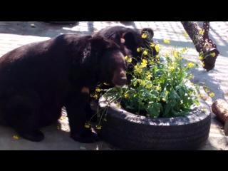 гималайские медведи екатеринбургских зоопарк