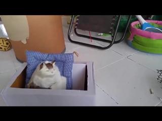 Знакомство котов с игрушечной кошкой