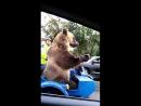 Медведь,ай да молодца