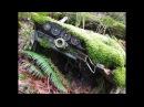 Находка в лесу распиленный Рorsche 911 singer