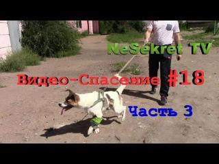 Видео спасение-18. Собака со сломанной лапой. Часть 3. Бим обрёл дом и хозяина. Го...