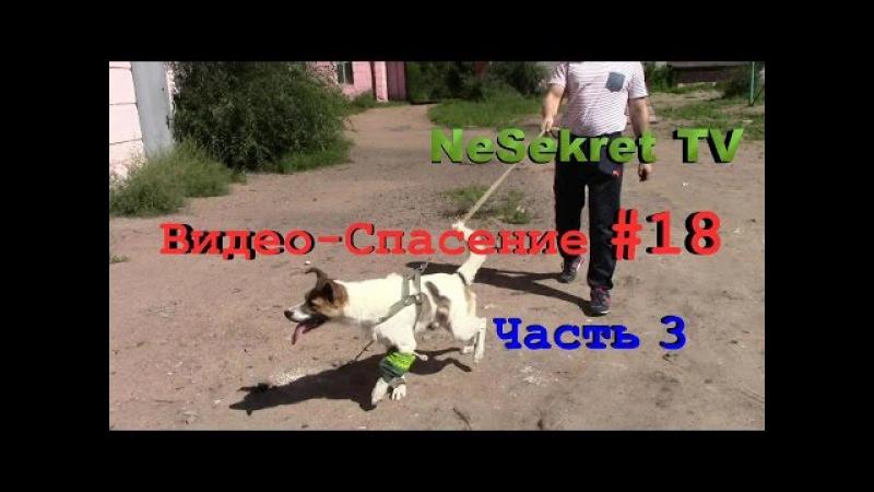 Собака со сломанной лапой. Продолжение спасения 18. Часть 3. Город Улан-Удэ.