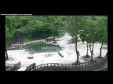 Two Adult Elephants Work Together To Save Young Calf From Drowning