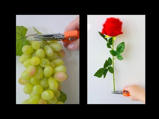 C39. Обрезаем одной рукой виноград и розы.