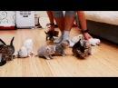 10 kittens