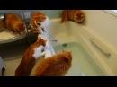 Lustige Katzen 2017 ! NEU !
