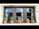 Put a CACTUS in your window and see what happens