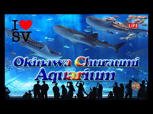 Okinawa Churaumi Aquarium. Japan ★ 沖縄美ら海水族館 ★ Океанариум Тюрауми (Окинава. Япония) [SV Life]