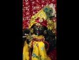 Beautiful Darshan of Sri Sri Radha Govinda and Sacinandana MahaPrabhu in Alachua Florida! 7/1/17